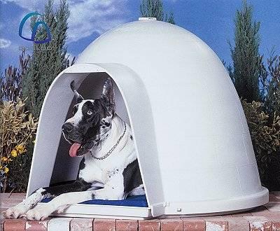 Small Dogloo Dog House